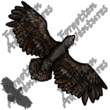Hawk_Tiny_Beast_02_Watermark