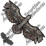 Hawk_Tiny_Beast_03_Watermark