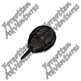 Horseshoe_Crab_Tiny_Beast_05_Watermark