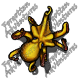 Octopus_Small_Beast_05_Watermark