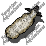 Sheep_Medium_Beast_01_Watermark