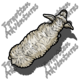 Sheep_Medium_Beast_03_Watermark