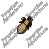 Neogi_Hatchling_Tiny_Aberration_06_Watermark