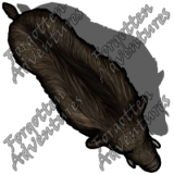 Boar_Medium_Beast_01_Watermark