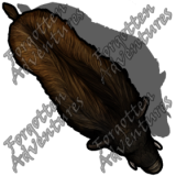 Boar_Medium_Beast_06_Watermark