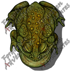 Giant_Toad_Large_Beast_02_Watermark
