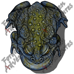 Giant_Toad_Large_Beast_03_Watermark