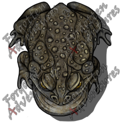 Giant_Toad_Large_Beast_04_Watermark