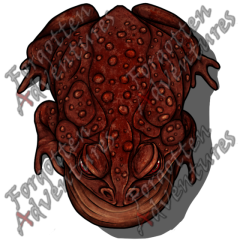 Giant_Toad_Large_Beast_06_Watermark