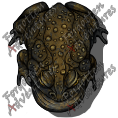 Giant_Toad_Large_Beast_09_Watermark