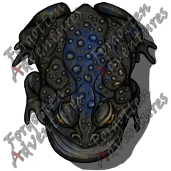 Giant_Toad_Large_Beast_11_Watermark