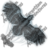Hawk_Tiny_Spirit_04_Watermark