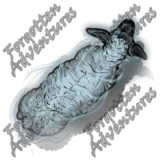 Sheep_Medium_Spirit_02_Watermark