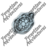 Turtle_Tiny_Spirit_02_Watermark